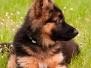 Miko de første uger i hornslet.